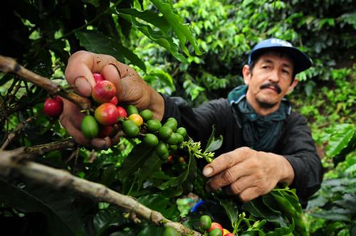 Colombian Coffee 13