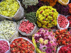 IMG_0127 (Ashutoshstream) Tags: ganapati bappa moraya