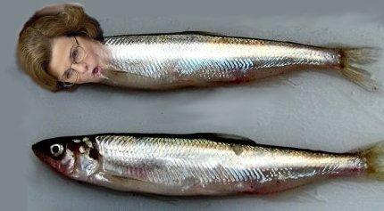 deltasteinfish