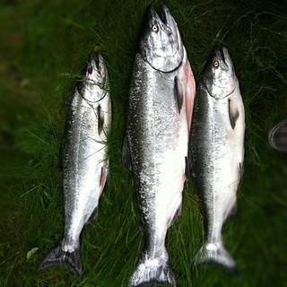 Hat Trick - Salmon Fishing Galiano Island