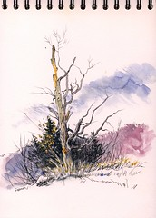 Dead Tree by the Deerfield Township Hall (Artist Naturalist-Mike Sherman) Tags: art watercolor landscape drawing michigan stonehenge february penandink pigmamicron midmichigan tintedpaper