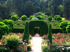 The Maze at Chatsworth (UGArdener) Tags: summer england english june gardens topiary unitedkingdom britain derbyshire maze yew summertime chatsworth hedges englishgardens lupines vosplusbellesphotos englishtravel