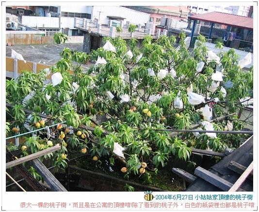 04.06.27 小姑姑家的桃子樹 (2)