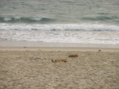 3 Dogs Sleeping on Aberdeen Beach (rustinpc) Tags: sierraleone freetown