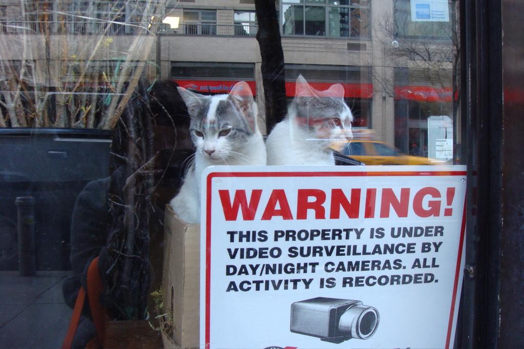 surveillancekittens