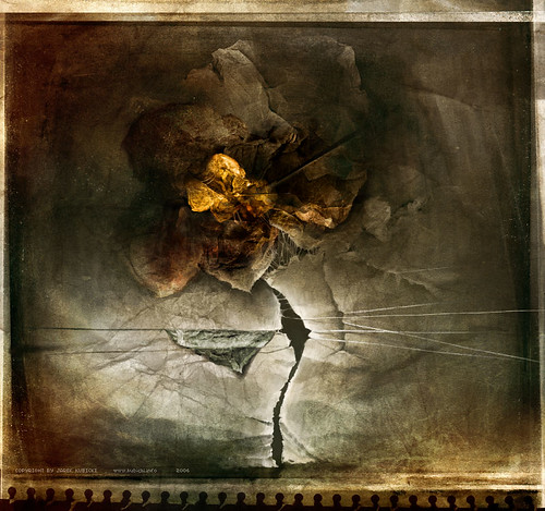 Rose_by_kubicki.jpg