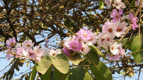 57.路邊偶遇盛開的花 (1)