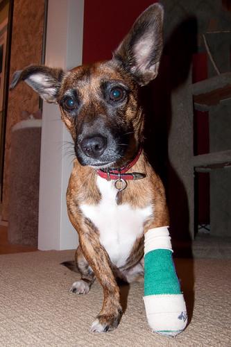broken toe. Broken Toe