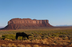 Free Range Horse (FeVa Fotos) Tags: horses utah monumentvalley fourcorners redrockcountry