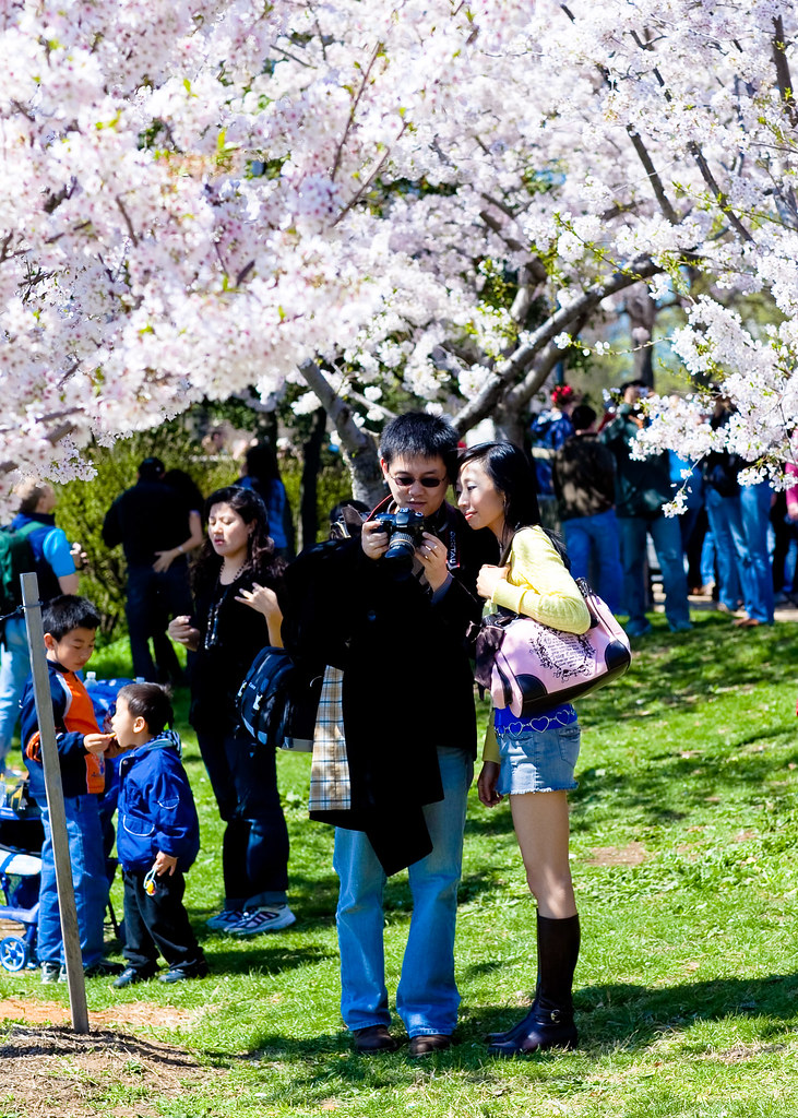 Washington D.C. Cherry Blossoms (1 of 7)