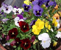 Primavera, fiori e colori - Spring, flowers and colors