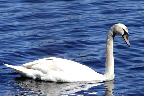 swantwo copy