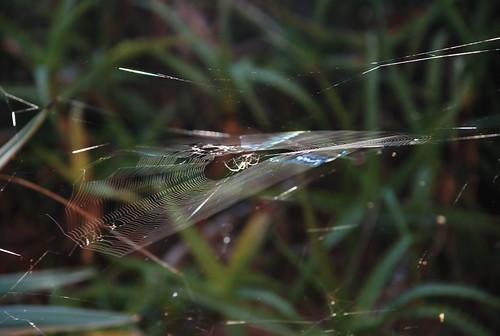 spider webs in april
