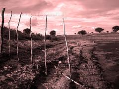 Marte? (Diogo Santos - FOTOREVEL STUDIO) Tags: trees red water gua brasil photoshop landscape natural paisagem vermelho bahia efeito cerca effect cor marte rvores arame farpado jabuticaba pscs2 areira canonpowershots5is canons5