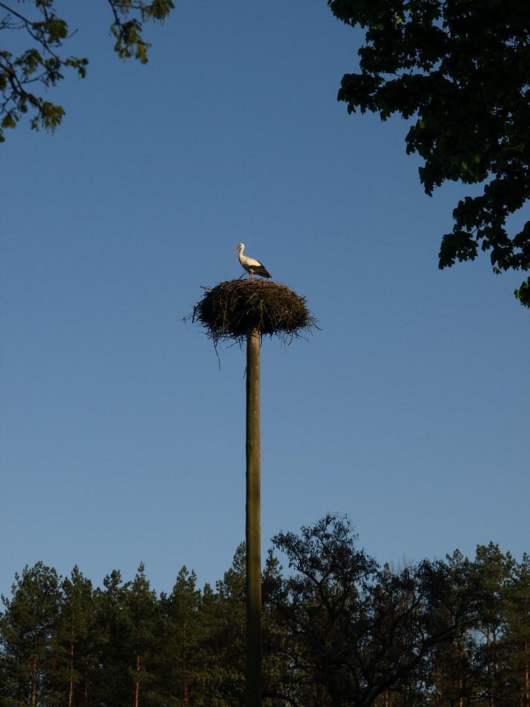 Los nidos de la cigueña