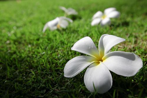 2009_Bali_1584
