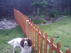 fenced off dog