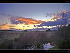 The Serene Silence of Sunrise (tomraven) Tags: trees light newzealand sky su