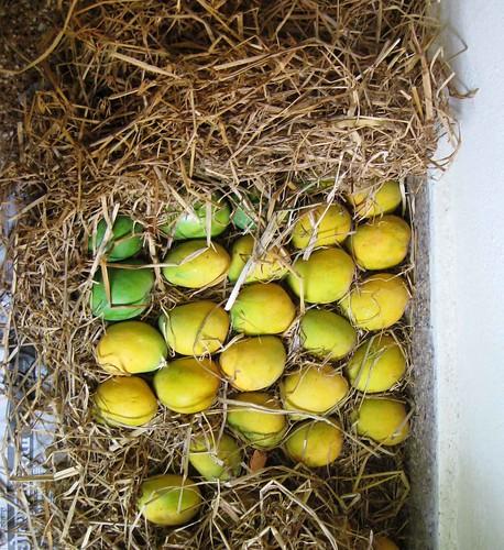 Mango4