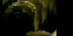 alien forest (5canner) Tags: plant macro green livingstone lithop