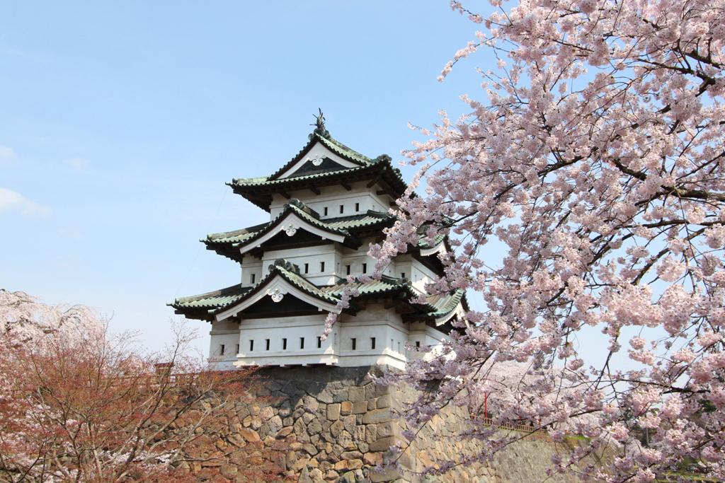 Hirosaki Park Sakura (15)