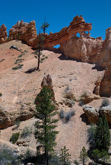 arches near mossy cave