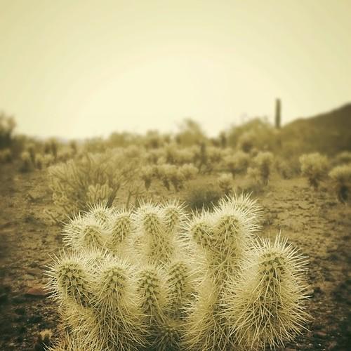 June desert scene