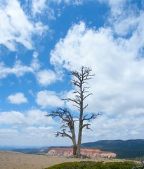 Lonely Bryce Tree (Stanley Zimny (Thank You for 44 Million views)) Tags: park blue red sky tree clouds utah nationalpark bryce soutwest