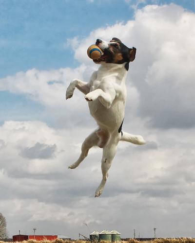 midair dog
