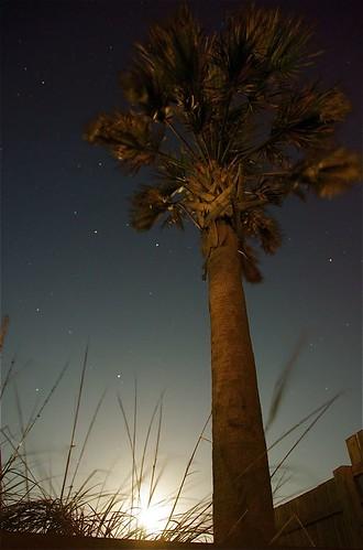 moon_palm_0073