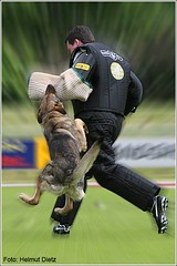Schäferhunde in action! - Bild-Nr. 389_9896