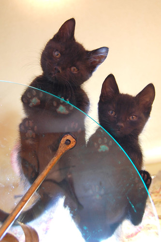 kittens_on_glass