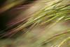 sunday morning (rlonas) Tags: light grass weed backyard dof bokeh pfogold