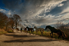 Running free (Stevacek) Tags: horses horse nikon shadows wideangle running jicin d300 sigma1020mm 10mm zebin jin zebn vosplusbellesphotos