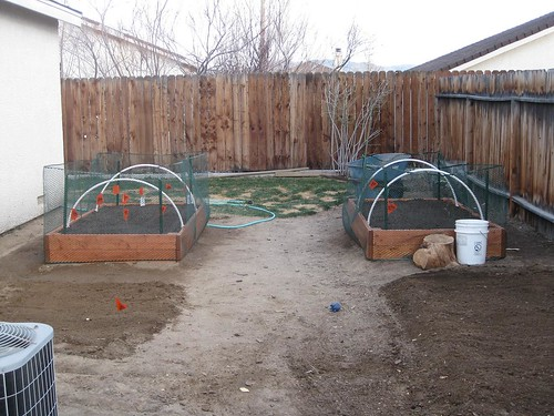 how to keep cats out of the garden. Http://farm4.static.flickr.com/3571/3386791542_cdcb2b8629.jpg How To Keep Cats Out Of The Garden