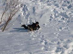 Lupin / emotion - montagne (Lupin et sa meute) Tags: schnee dog chien mountain snow berg hiver nieve perro hund neige feeling montaa tenderness emocin loveliness motion lapinporokoira kindliness lapskvallhund lapponianherder bergerfinnoisdelaponie
