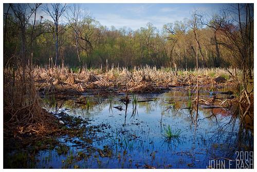 Dry Lake. Reynolda Gardens, Winston Salem, NC.