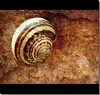 Ǥσ яɛαℓ ƨℓσω Ƴσʋ ℓικɛ ιт мσяɛ αи∂ мσяɛ Ƭακɛ ιт αƨ ιт cσмɛƨ Ƨρɛcιαℓιʓɛ ιи нαʌιи' ғʋи (мʏяιαм70) Tags: texture nature slow framed sony grunge snail natura explore lumaca crawl chiocciola takeiteasy lentezza guscio anawesomeshot myriam70
