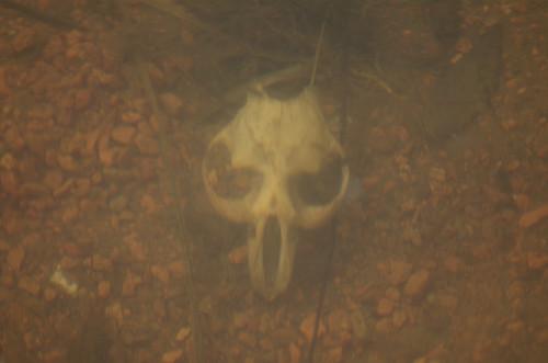 skull2940
