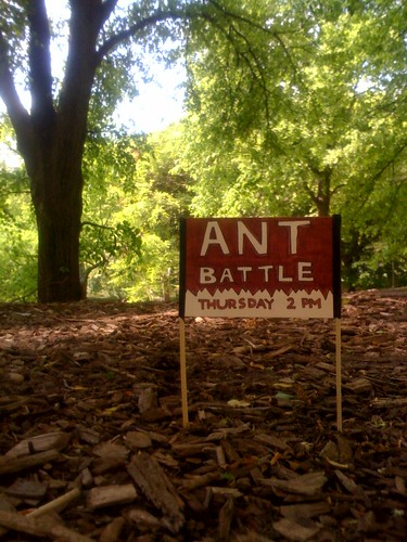 Ant Battle - Thursday 2pm