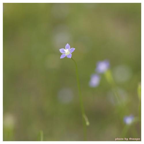 Flower 20090514 #02