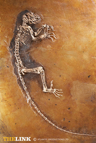 fossil_plate_full