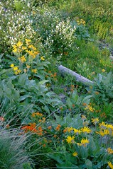 Methow River service berry, paintbrush, balsamroot, larkspur, grasses