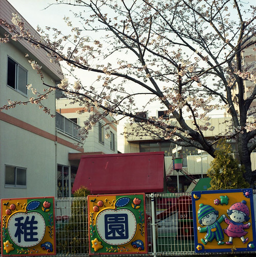 Kindergarden Blossoms