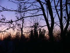 Behind_SunSet (Insane*Purple [ A l i c e * *) Tags: sunset nature animal tramonto behind dietro insanepurple