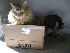 Jasper and Maggie explore a new box