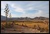 Parque Natural Cabo de Gata-Níjar (scarabaeus sacer) Tags: verano 2009 almería cabodegata cabodegatanijar a3b nikond300 jatm64