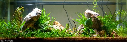 20L Quarantine Aquarium