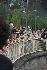 IMG_6644 (iris66de) Tags: zoo cologne kln hennes flugshow eisvogel