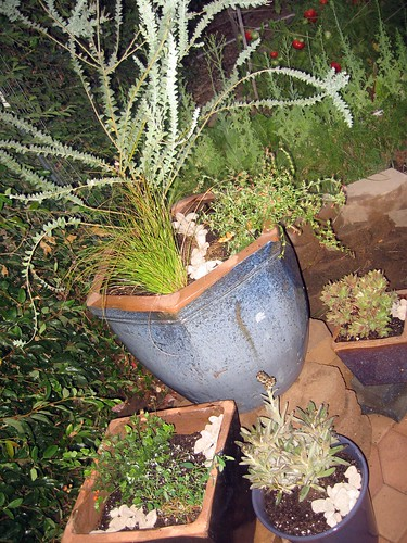 Potted plant grouping